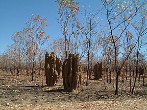 Termite mounds NT.JPG